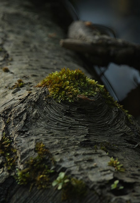 mousse riviere