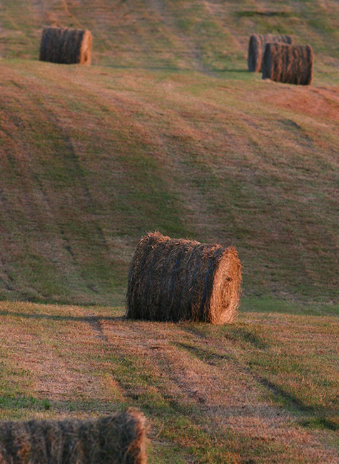 paysage agricole BFC